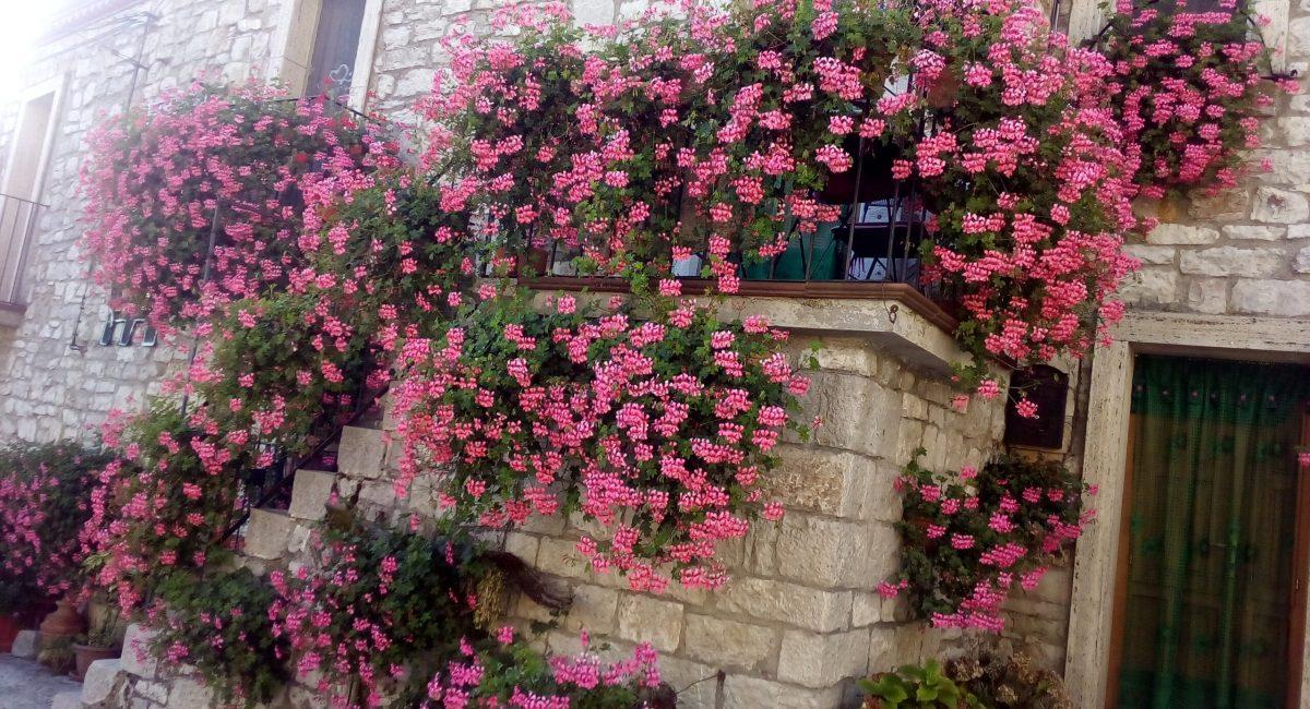 Composizioni di fiori 11
